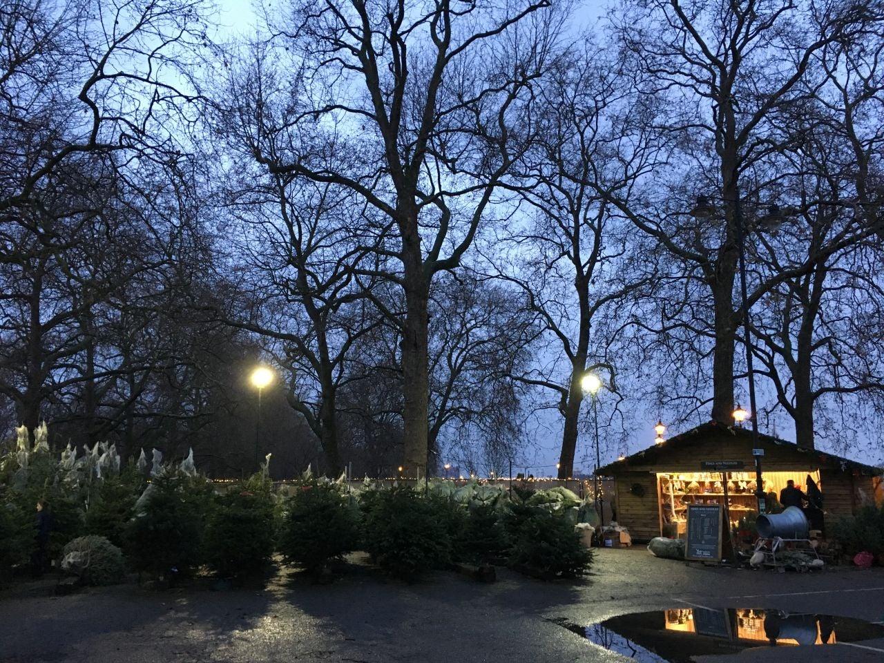 photo etonline - Christmas Tree Shopping