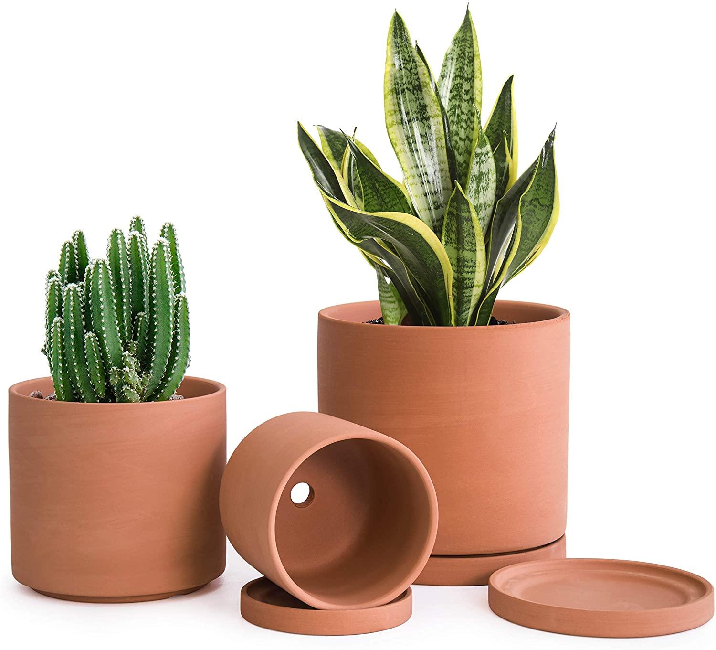 Terracotta Pots for Plants