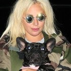 Lady Gaga Dognapping: Why Someone Would Want to Steal Her Pets