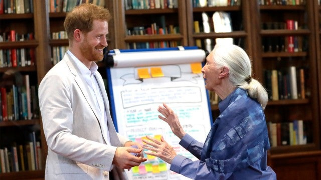 Prince Harry Is Finding Post-Royal Life to Be 'Challenging,' Friend Jane Goodall Says