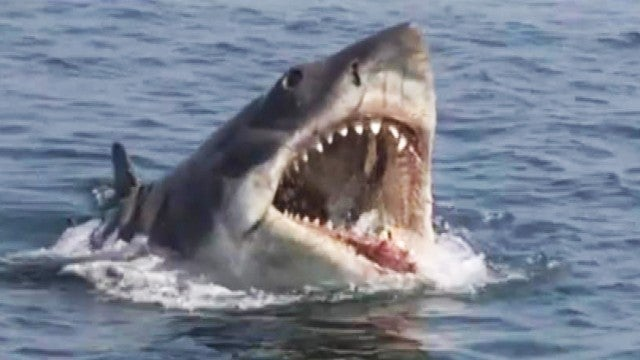 'Jaws' Turns 45: What You Don't Know About the 1975 Classic