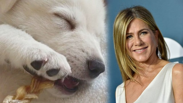 Jennifer Aniston Introduces New Rescue Puppy Chesterfield