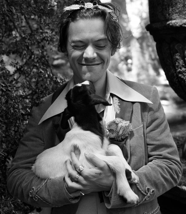 Harry Styles Gucci campaign with goat black and white