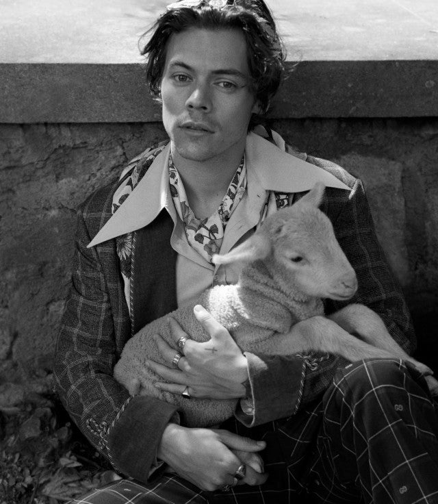 Harry Styles Gucci campaign with lamb black and white