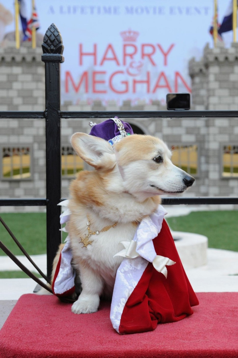 Royal Wedding Corgis