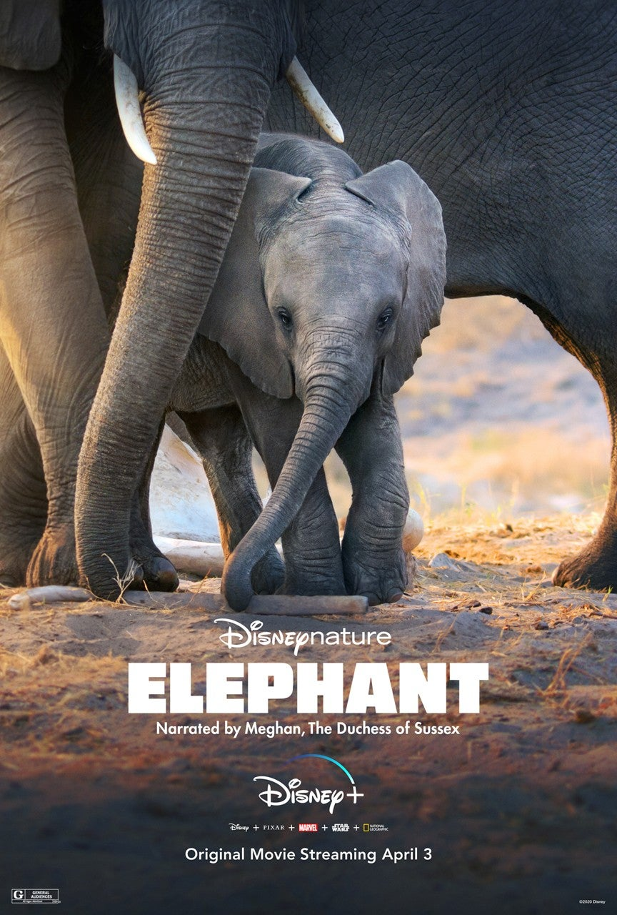 Elephant on Disney+