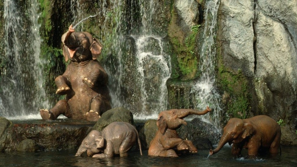 Jungle Cruise At 65 How The Movie Will Pay Tribute To Disney S Beloved Attraction Entertainment Tonight