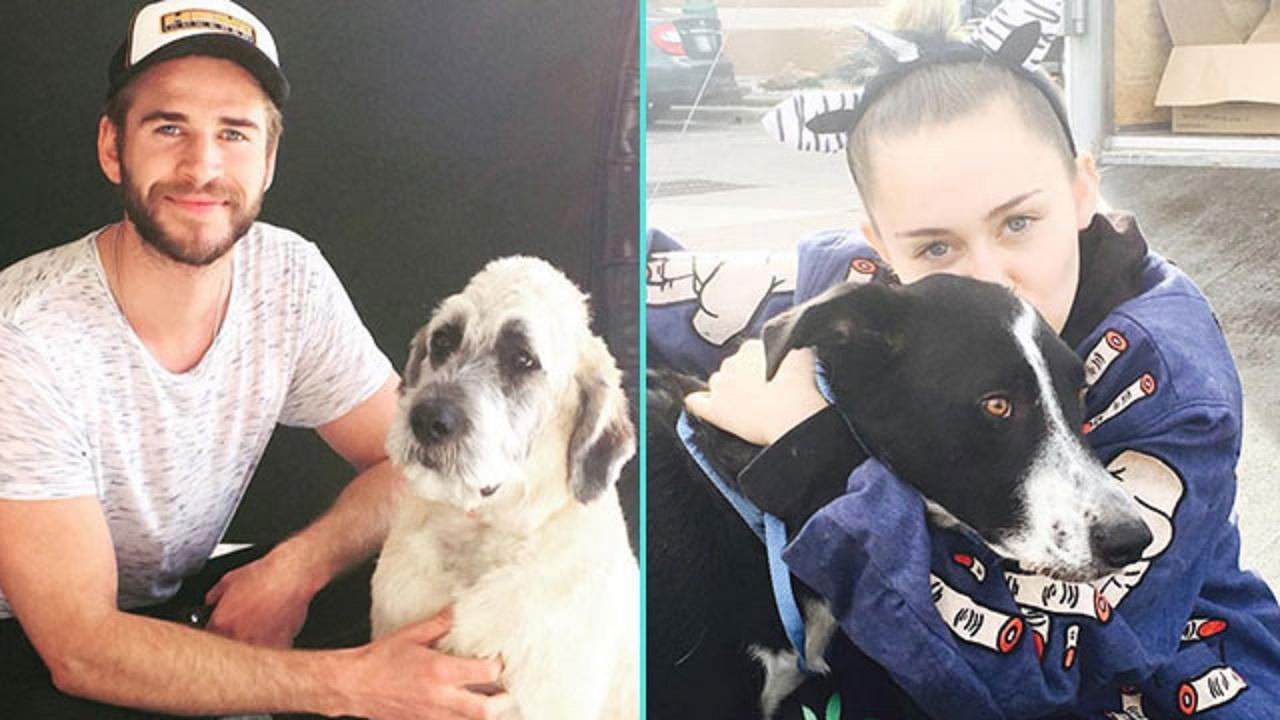 Miley Cyrus Helps Liam Hemsworth Adopt A Dog Finds A