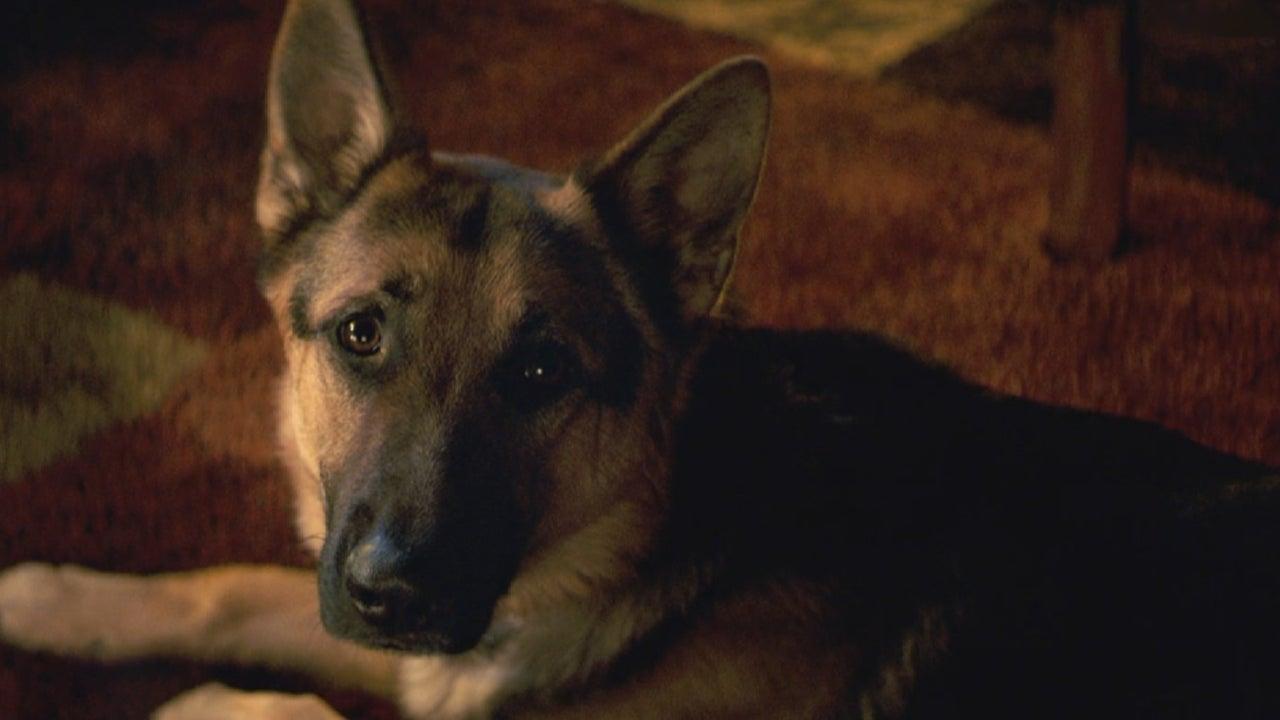 A Dog S Purpose Film Watch Online