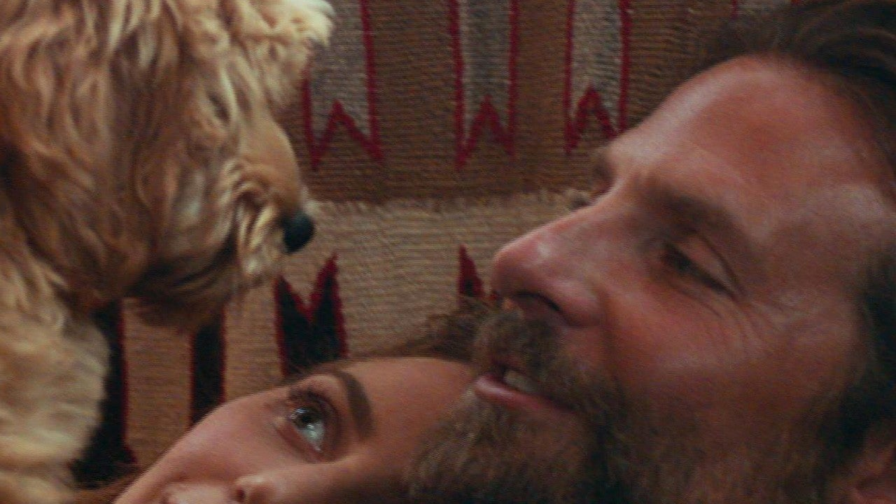 Why Bradley Cooper's Dog Charlie Is the Real Scene-Stealer of 'A Star is Born' (...