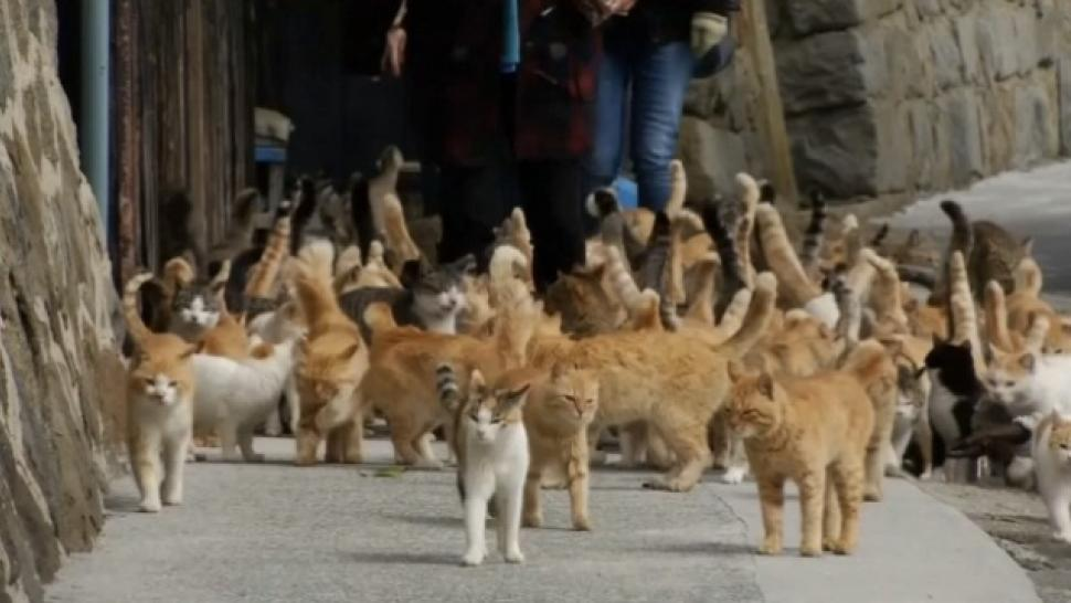 There S An Island In Japan Where Cats Outnumber People 6