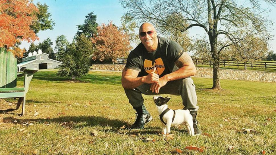 Dwayne The Rock Johnson Donated 1 500 To Save A Puppy