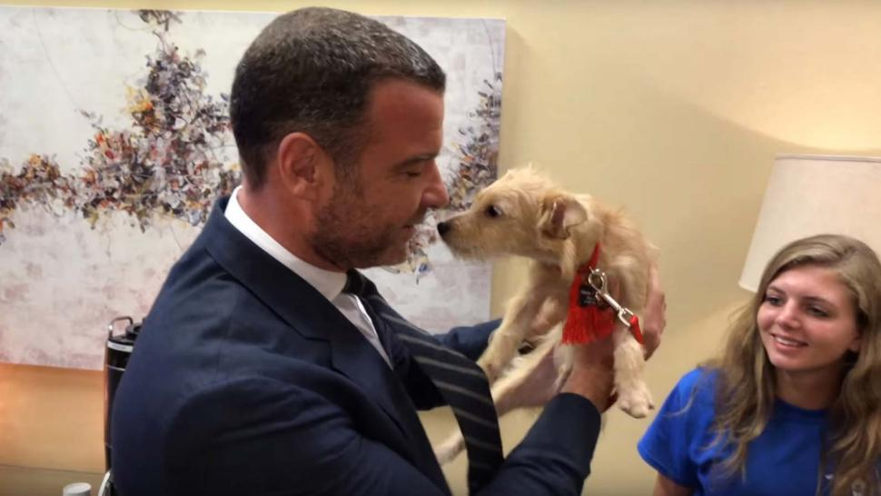 Liev Schreiber With Dogs Rescued From Hurricane Harvey