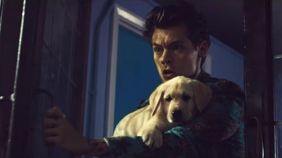 Harry Styles plays with a puppy