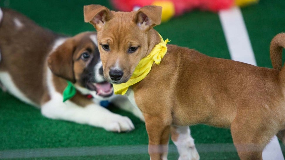 Puppy Bowl XIV Contenders