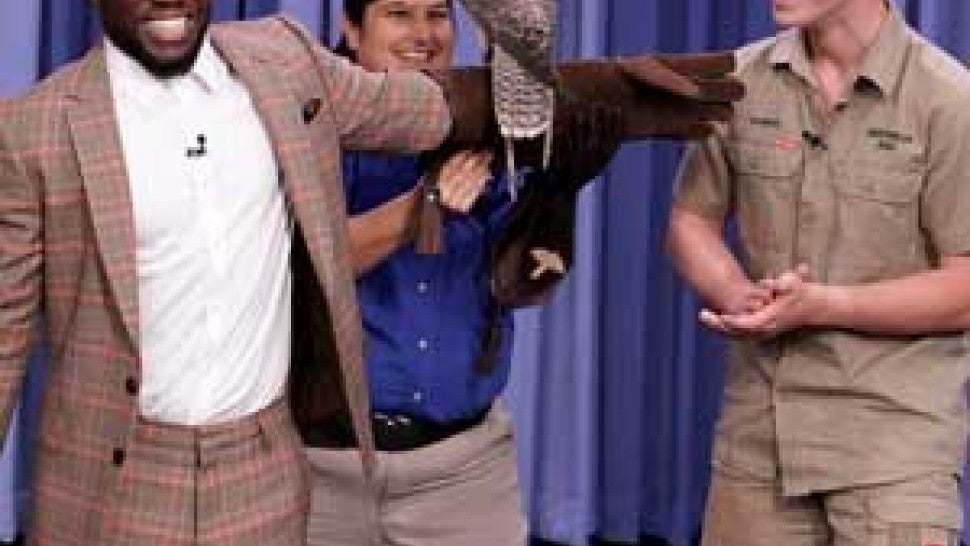 Kevin Hart and Robert Irwin with a falcon on 'The Tonight Show'