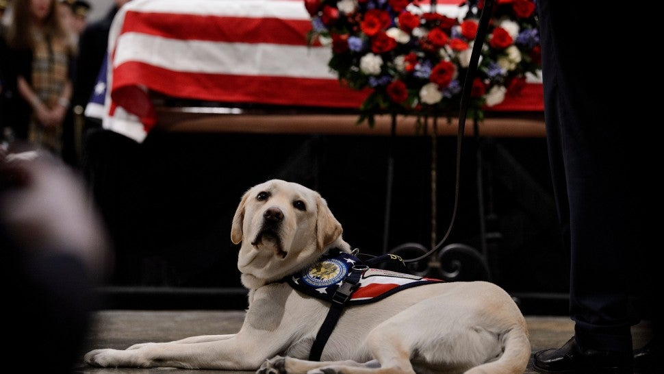 President George H.W. Bush's Service Dog 'Sully' Salutes Companion At Capitol