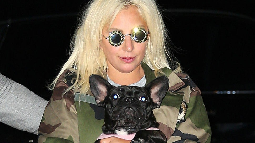 Lady Gaga's Two Dogs Recovered After Being Kidnapped.jpg